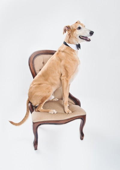 Dog Photography photos in Somerset