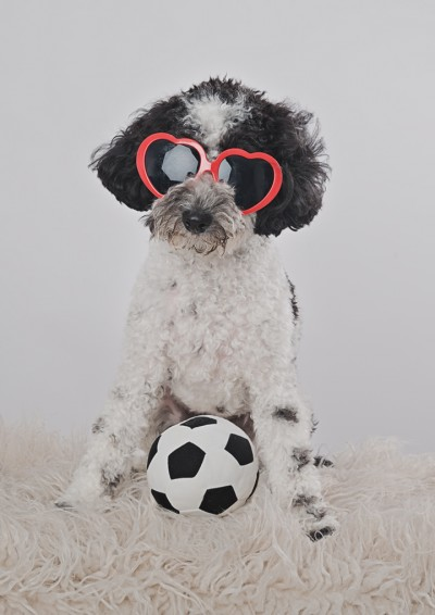 Dog photos Somerset