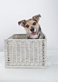 Bridgwater Dog Photography 12