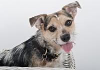 10Bridgwater Dog Photography