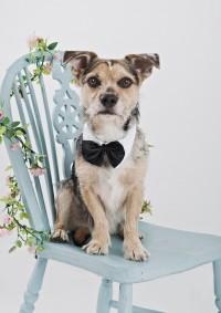 9 Bridgwater Dog Photography