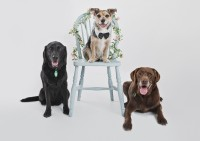 8 Bridgwater Dog Photography