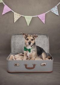 7 Bridgwater Dog Photography