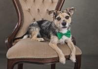 6 Bridgwater Dog Photography