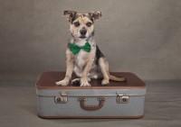 5 Bridgwater Dog Photography