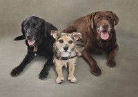 4 Bridgwater Dog Photography