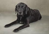 3 Bridgwater Dog Photography