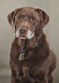 2 Bridgwater Dog Photography