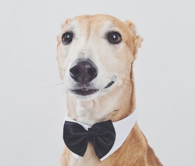 Fun dog photos