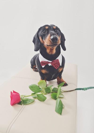 dog valentine photos
