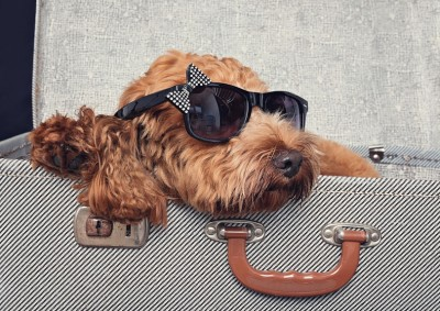 Sunglasses How doesn't like a fashionable dog! Some of these images are just adorable and got such a modern vibe, don't you think? Real show stoppers to display on the walls.