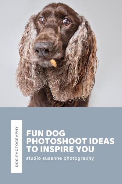 Fun dog shoot ideas
