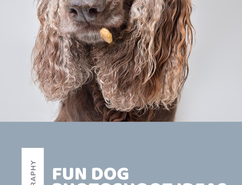 Fun dog photoshoot ideas to inspire you