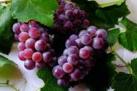 grape photo
