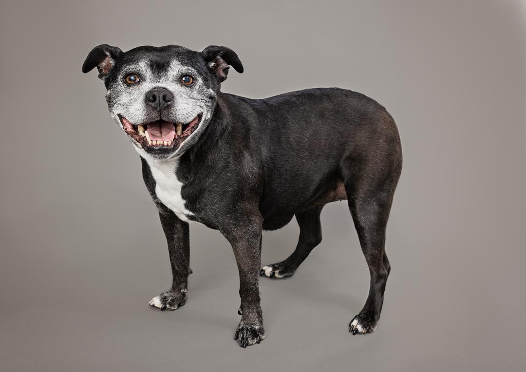 senior dog photo