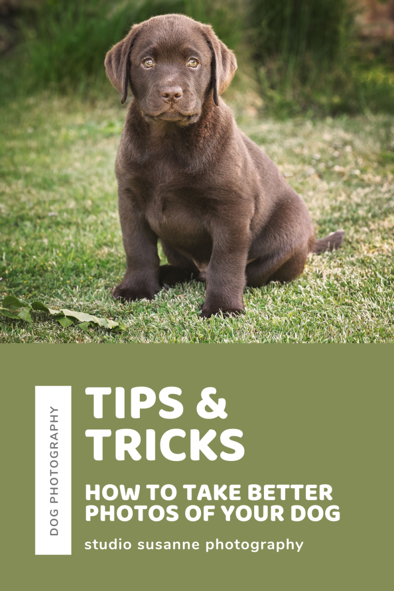 Tips & tricks_ How to take better photos of your dog photo