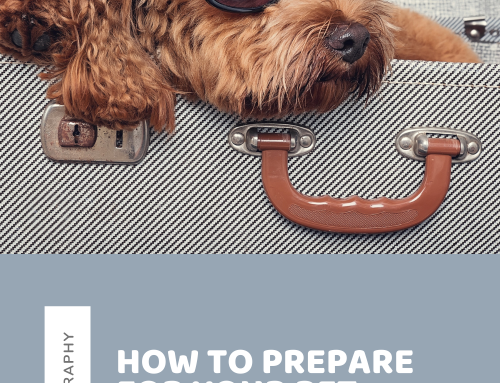How to Prepare for Your Pet Photo Session